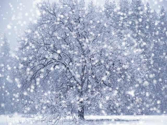 Snow Falling Wallpaper...