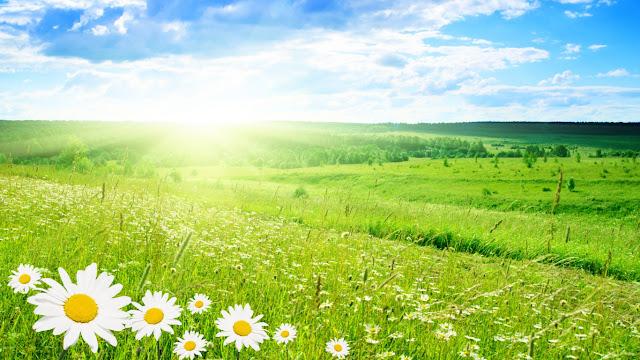 Cánh đồng hoa xanh tươi mát