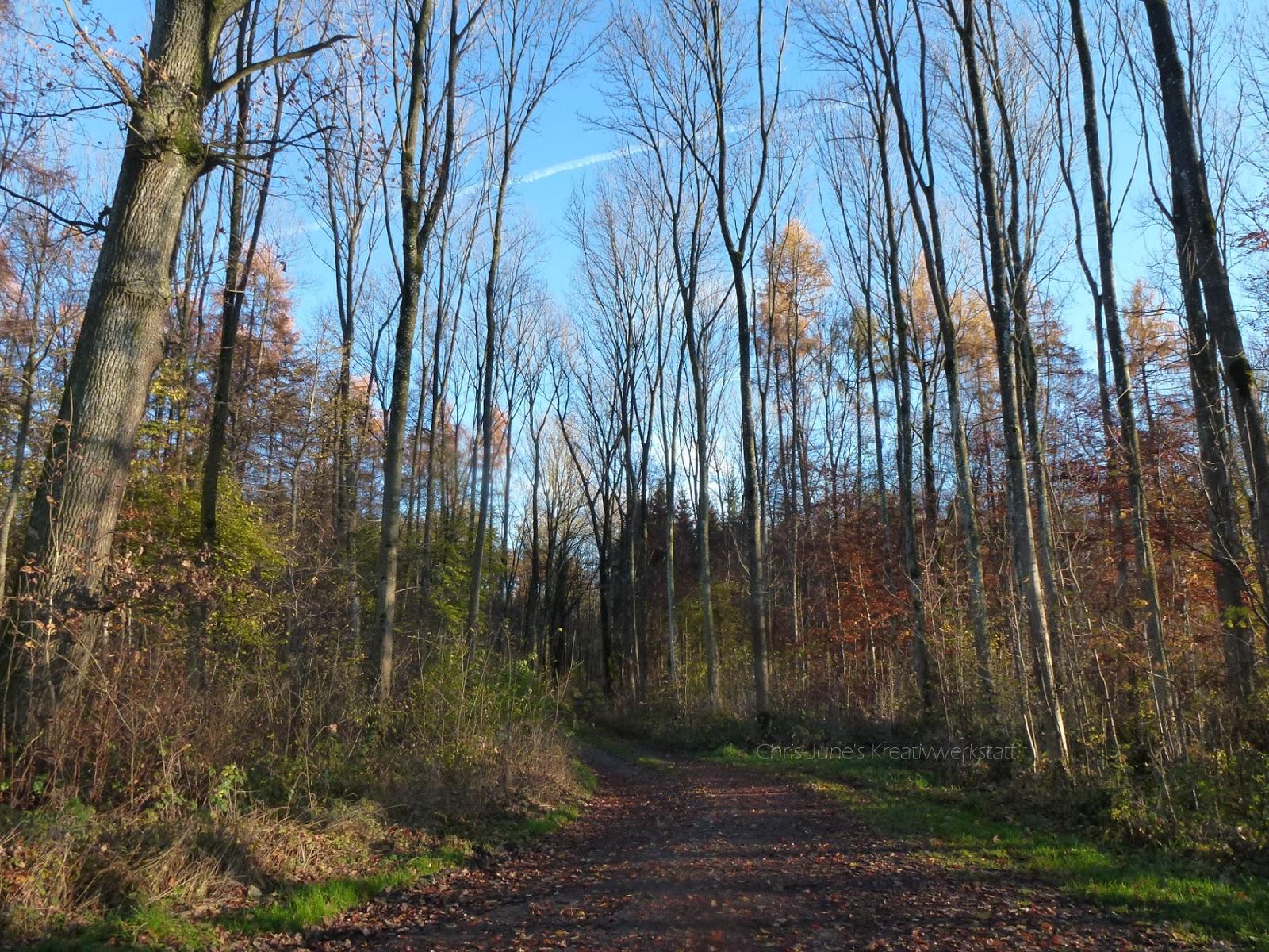 Waldweg im November