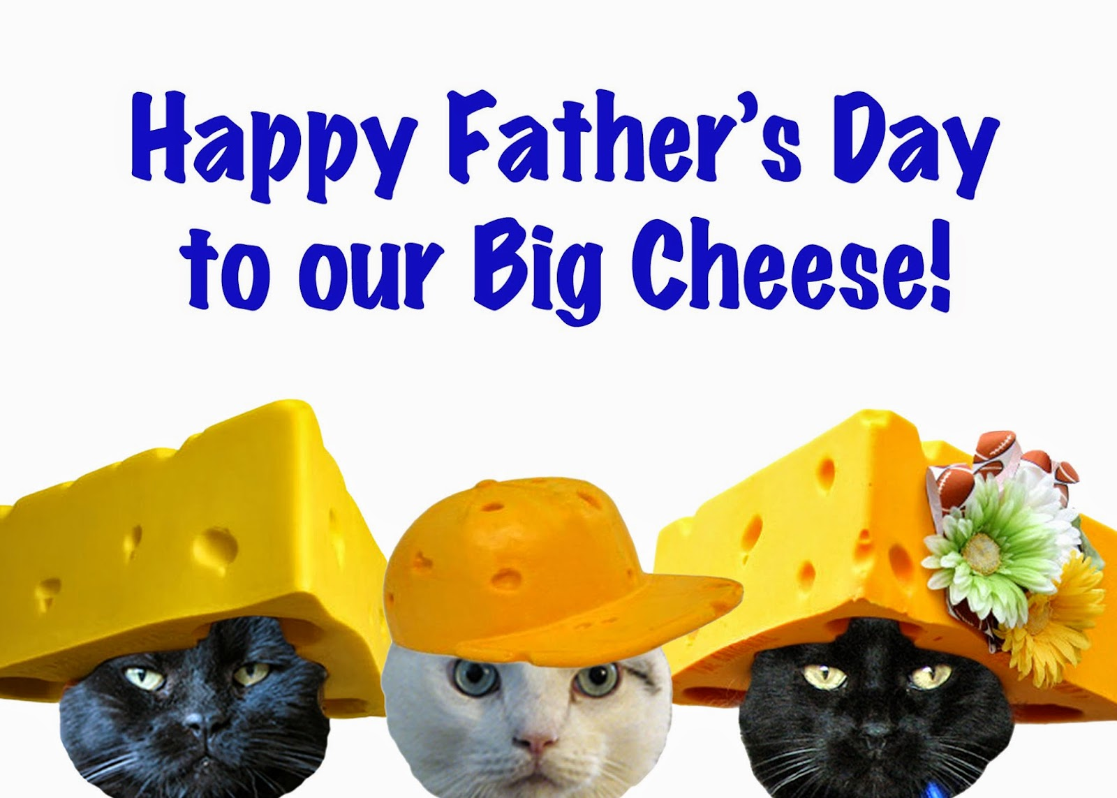 Animal shelter volunteer life happy fathers day to our big cat daddy happy fathers day to our big cat daddy sciox Gallery