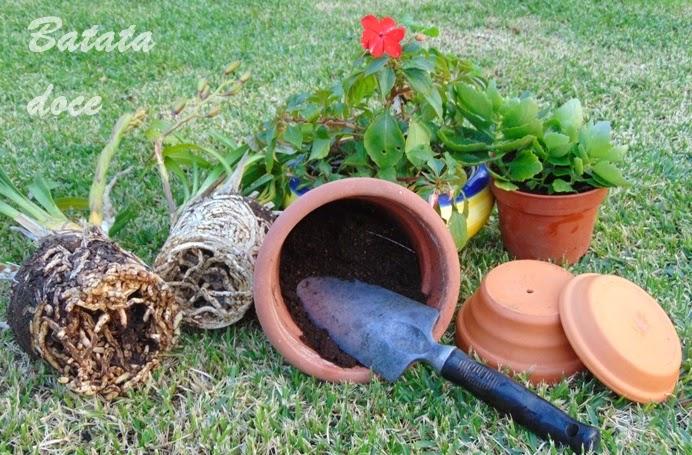 Mudar plantas de vasos
