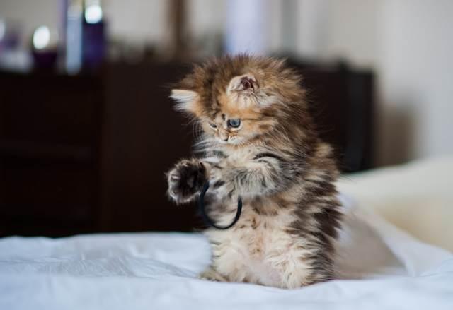 anak kucing comel main getah
