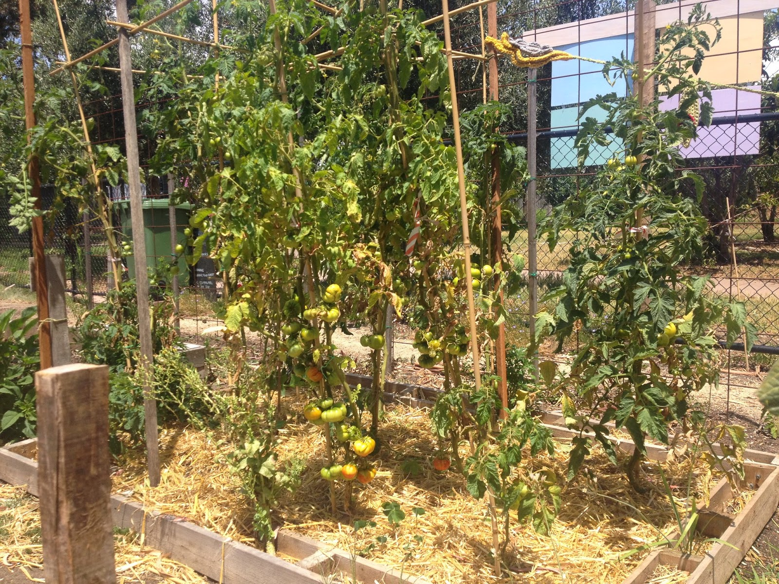Moreland Community Gardening: Did you know it\'s Veganuary?