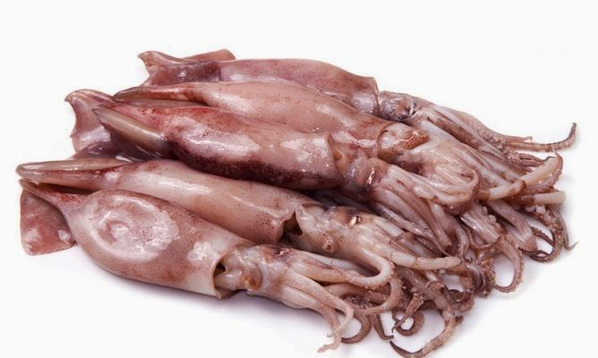 Calamares Rellenos De Carne  - Calamar Farcit De Carn -  Squid Stuffed With Minced Meat (traditional Recipe From Spain)