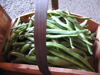 runner beans, broad beans, french beans