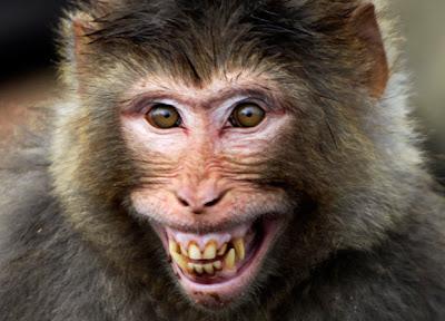[ARRIBAPLAY] ROPG DE SONICO Monkey-face_1826524i