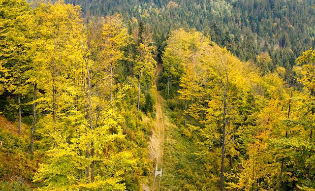 Jesienna fotografia krajobrazu. Beskid Śląski, Wisła, Stożek. fot. Łukasz Cyrus