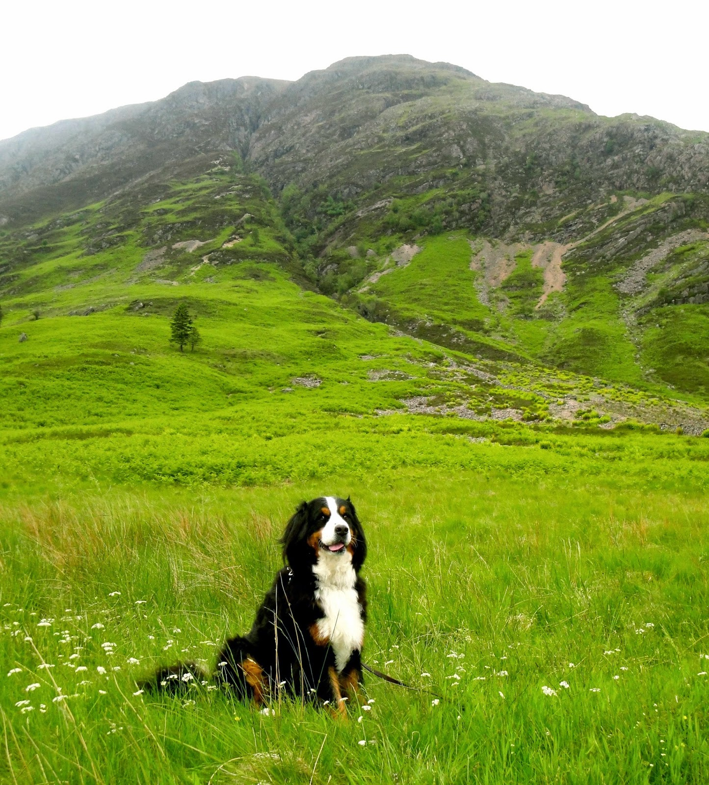 Mattie on a hike in Glencoe