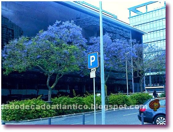 Imagem do canteiro divisório da Rua Caribe, tendo ao fundo o Casino, Lisboa