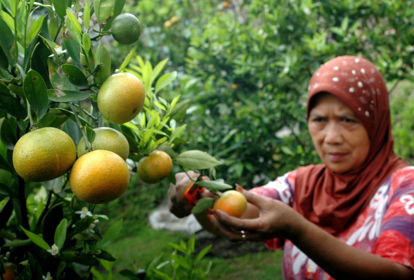 Cinta Buah Lokal Indonesia, Kenapa Tidak?   galassia del sogno