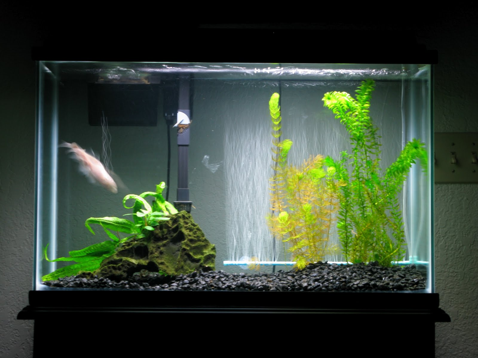 Betta fish for How to keep fish tank clean without changing water