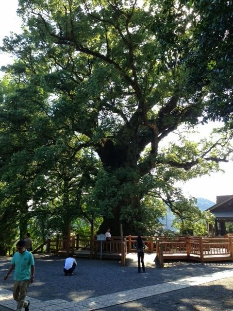蒲生のクスの木