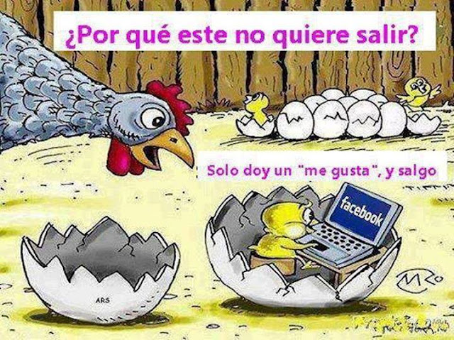 Humor Pollitos Facebook