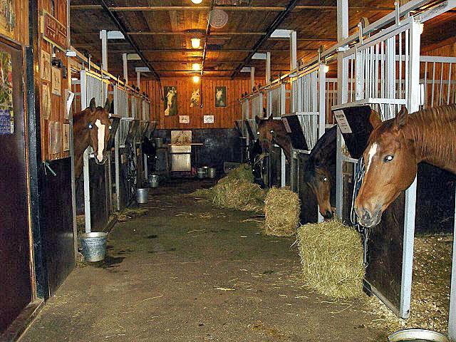 Pferdestall mit braunen Pferden