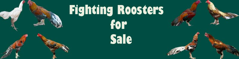 Fighting Roosters For Sell.
