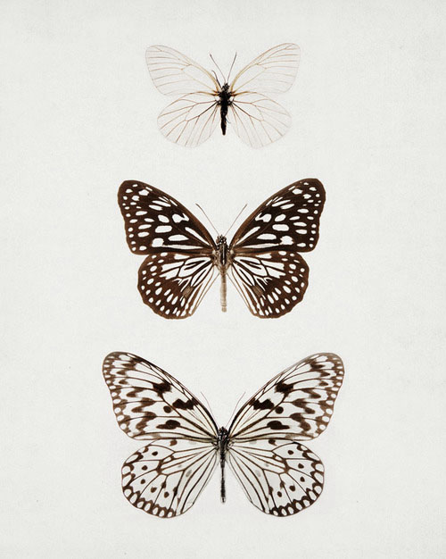 Butterflies In A Frame Pictures Or Wallpaper