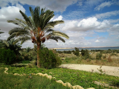 tunis in fayoum