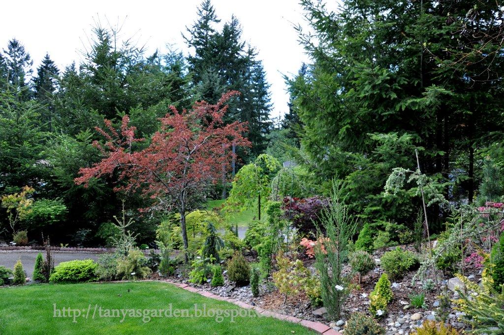 Mysecretgarden Garden Of The Conifer Collector Part 2