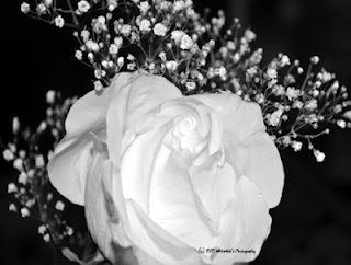 Purity of a rose for cleansing your energy.