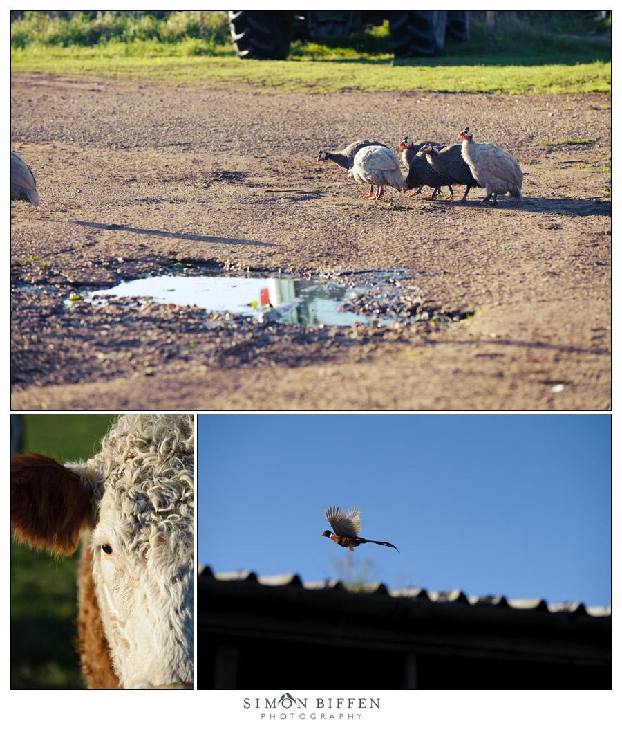Around the farm - Simon Biffen Photography