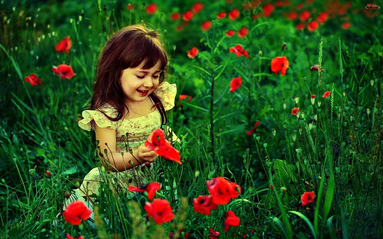 Cute baby girl with red flowers hd wallpaper 1280 x 800