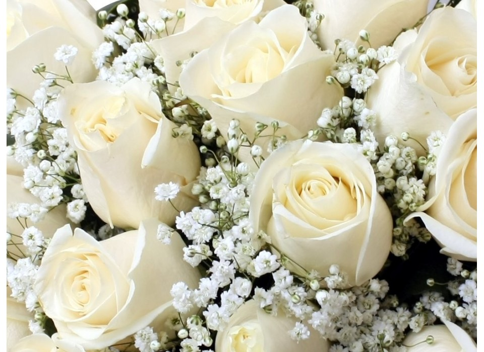 Fotos de Flores - PasarlasCanutas