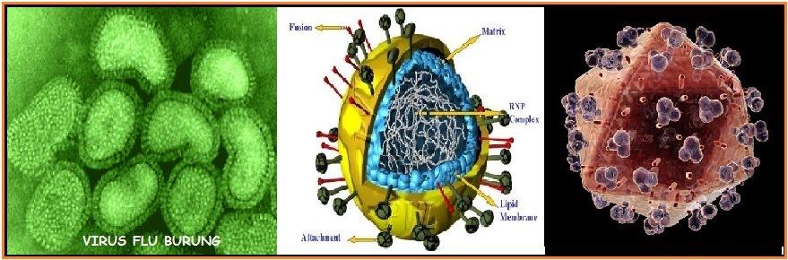 Soal Tentang Virus Biohikmah