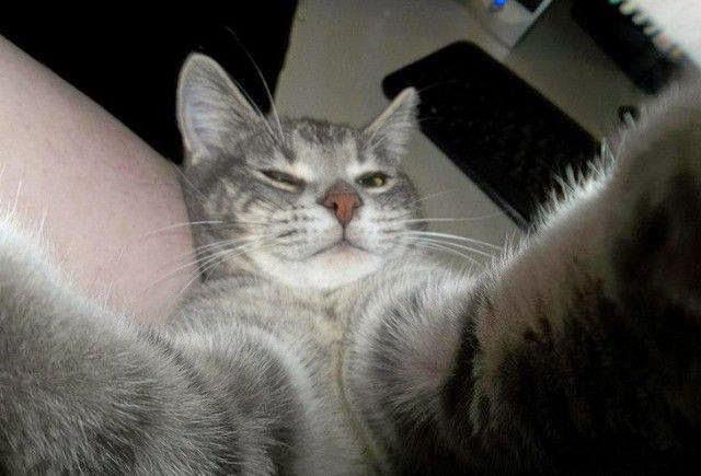 10 selfies gatunos