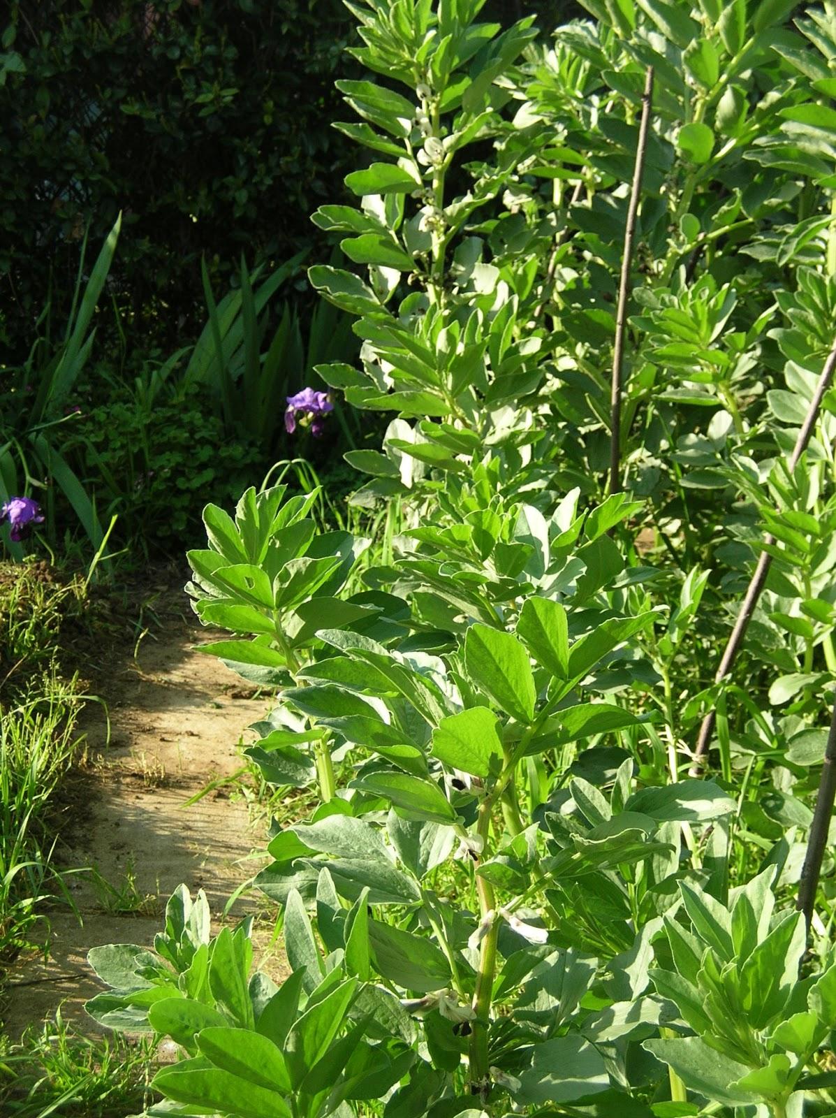 la primavera idee giardino fresco : La Primavera nel mio orto ? arrivata...e io la vedo! Linkiesta.it