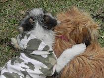 Con alma de perro