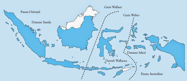 Penyebaran Keanekaragaman Fauna di Indonesia Garis Weber dan Wallace