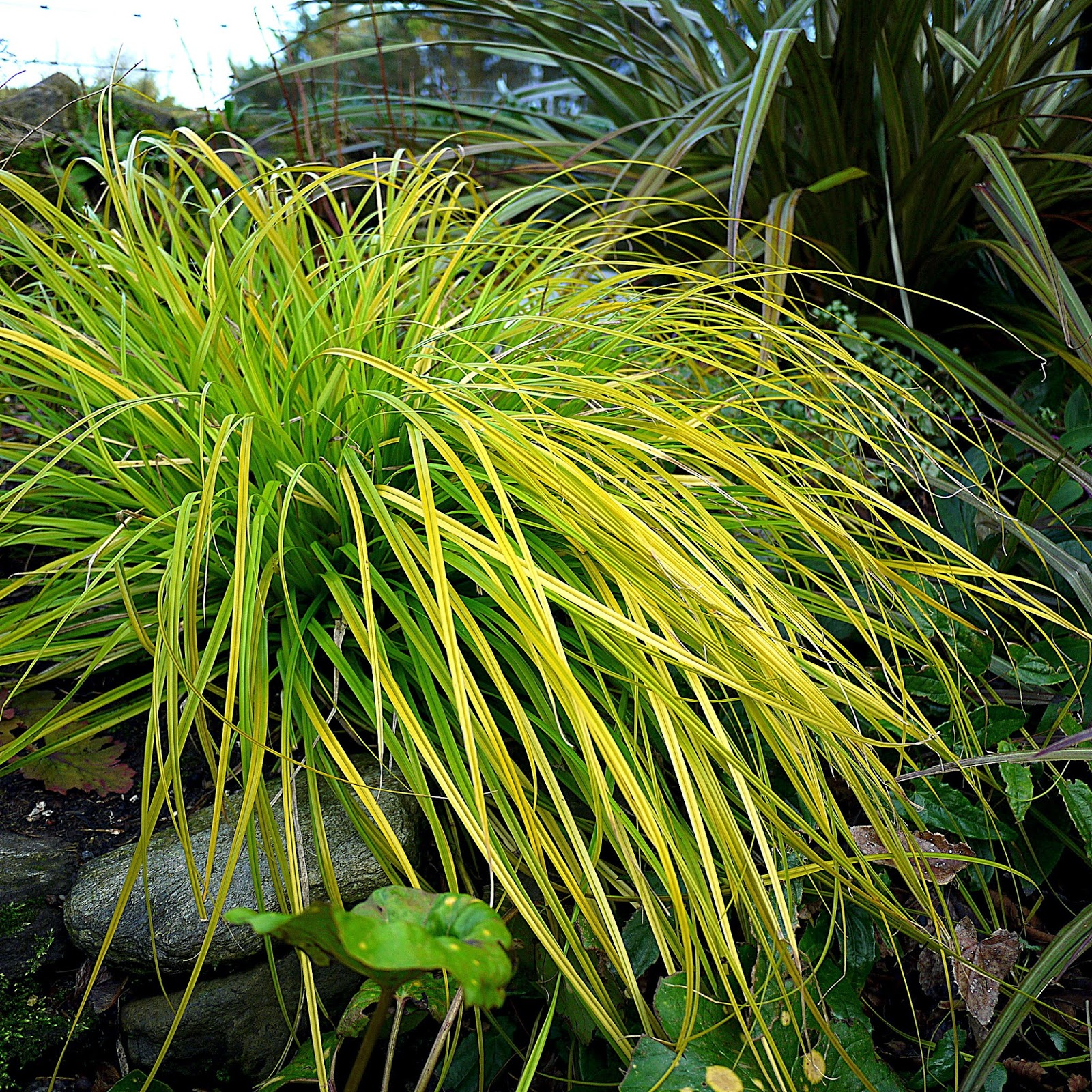 exotic gardening 55 north winter colour