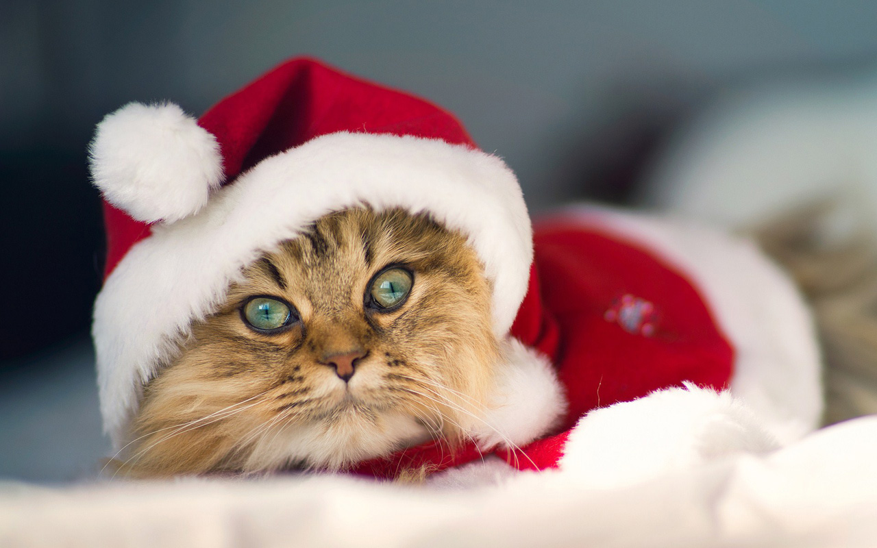cats-christmas-pets-HD-Wallpapers+03.jpg