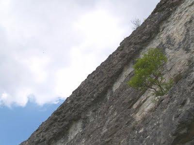 Monte Radicchio
