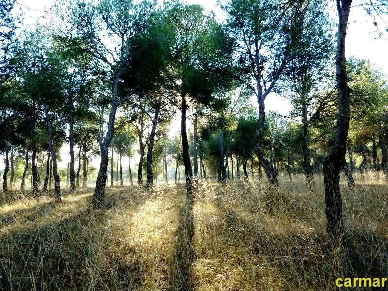 RINCONES DE ZARAGOZA Pinares de Venecia