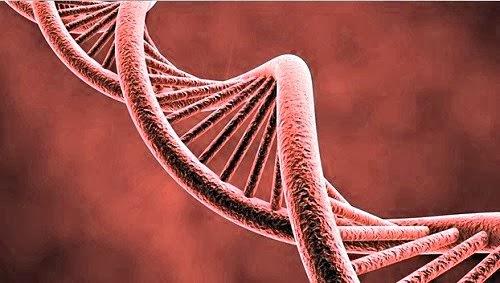 segundo codigo genetico adn