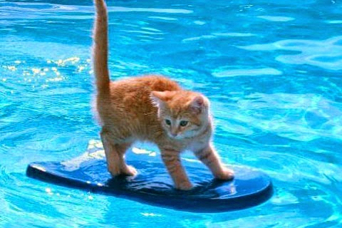 Funny cats swimming interesting facts latest pictures for Cute pool pictures