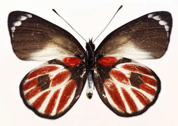 Gambar Kupu kupu