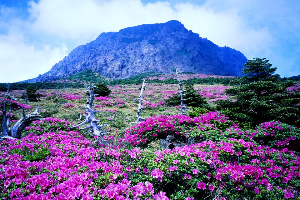 Beautiful Jeju Island In South Korea Korean Hawaii Most Beautiful Places In The World