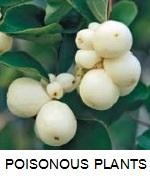 67 POISONOUS PLANTS