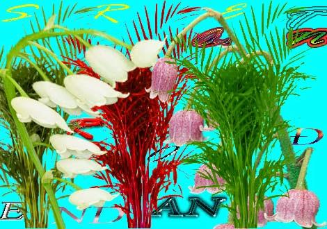 Rođendanska čestitka Cvijetni aranžman