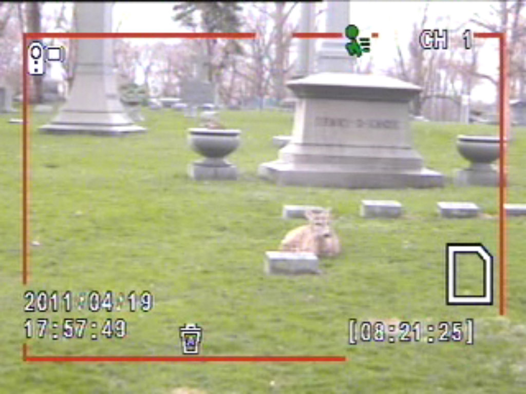 UPDATE: still no deer at 12:23 pm cdt tuesday 19 april 2011; the new webcam ...