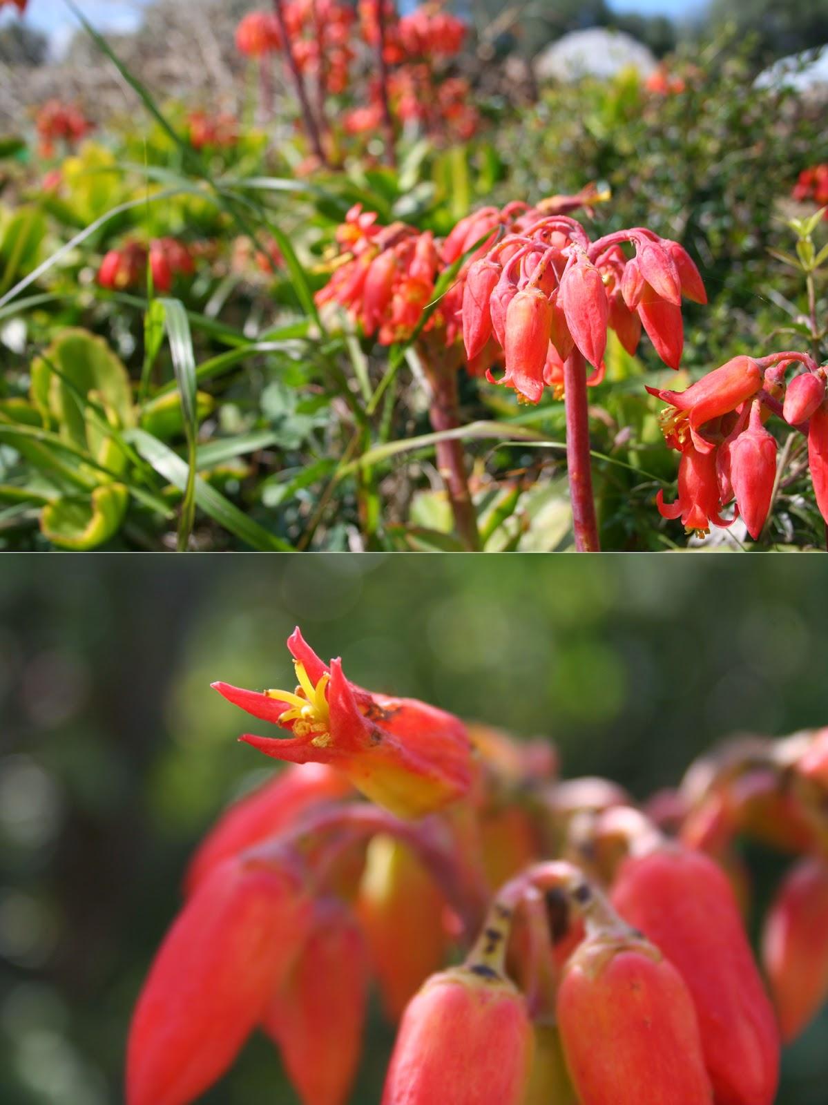 El blog de Coches Menorca: Flores silvestres