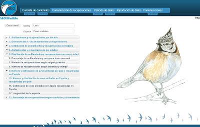 Screenshoot anillamientoseo.org