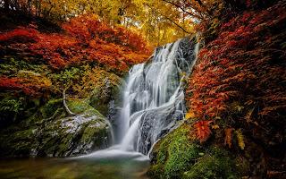 Cascadas de agua bosque