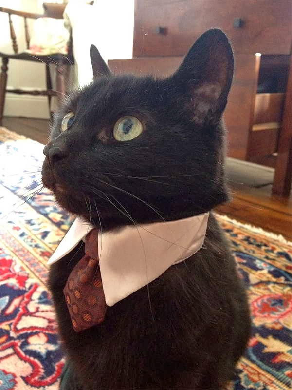 Funny cats - part 83 (40 pics + 10 gifs), cat pics, business cat wears tie
