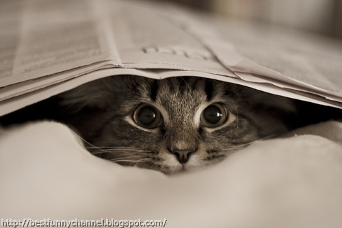 Kitten and newspaper.