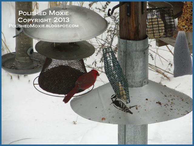Picture of woodpecker on suet feeder.