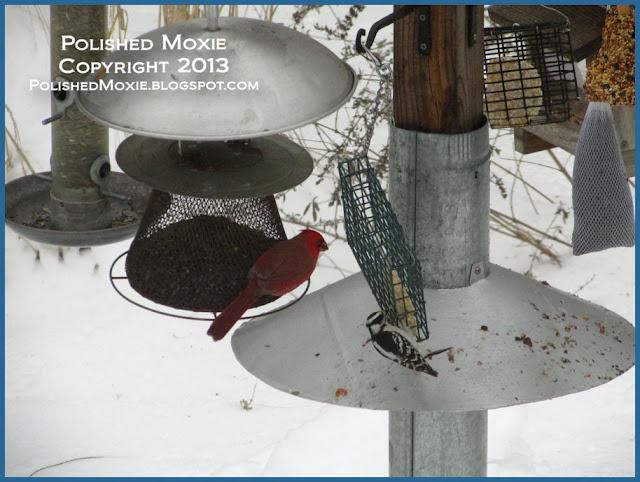 Picture of woodpecker on suet feeder.