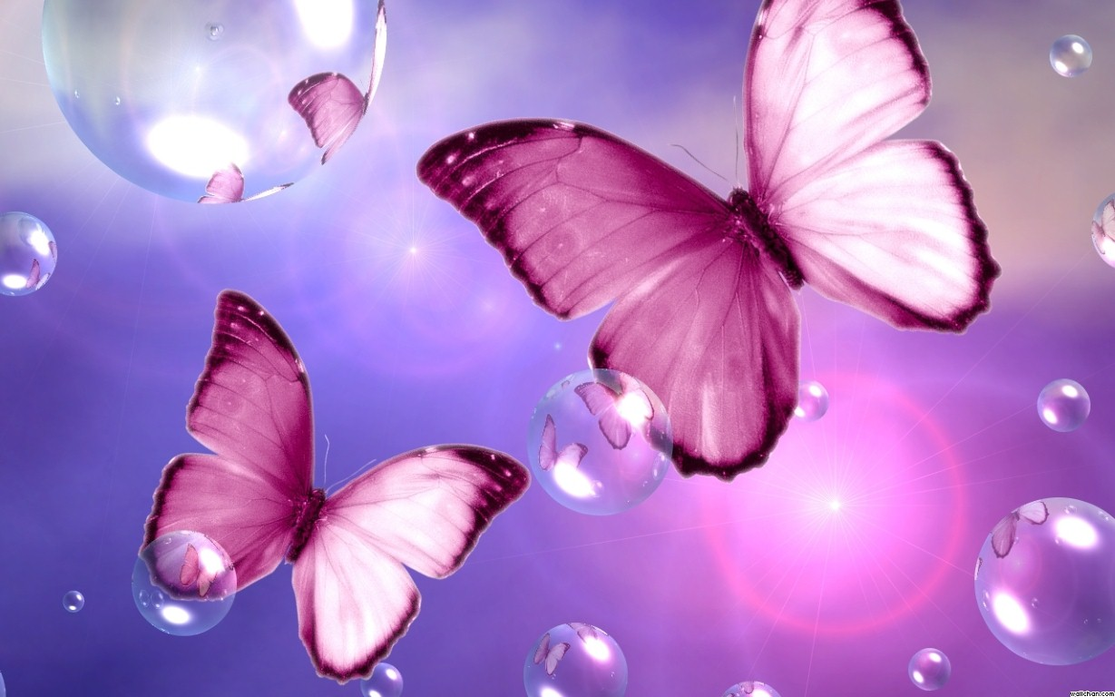 beauty flower: beautiful pink butterfly wallpaper